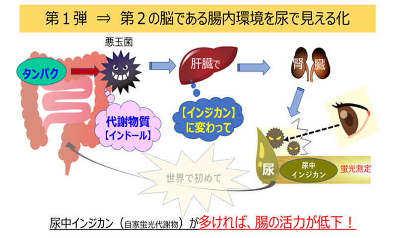 第1弾⇒第2の脳である腸内環境を尿で見える化
